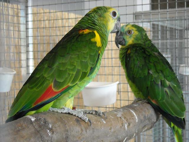Klatki dla papug - co warto o nich wiedzieć?